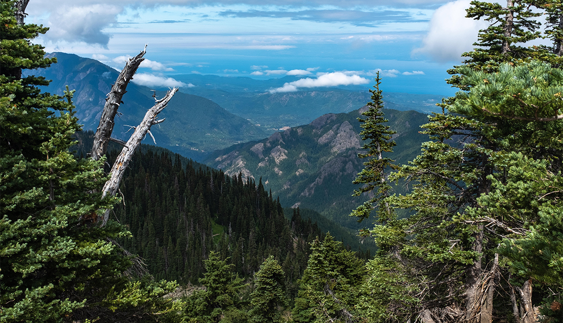 A view of a mountain in the Olympic National Park,