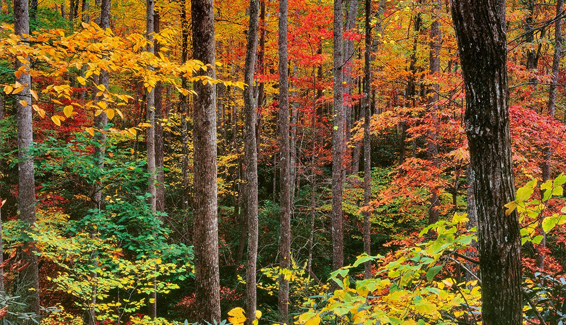 item 4 of Gallery image - Autumn Colors, Cradle of Forestry, Pisgah National Forest, North Carolina