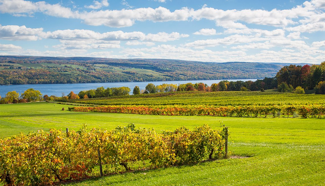 Fall grape vineyards on Seneca Lake in the Finger Lakes region of New York state