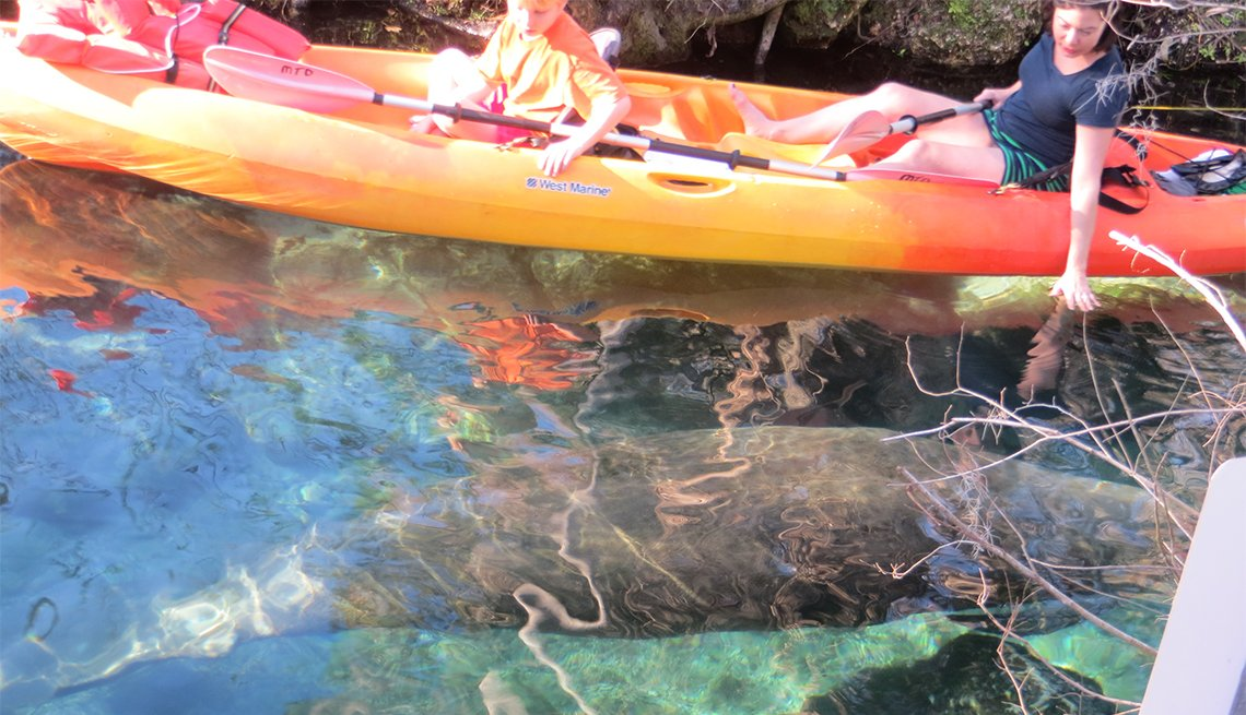 Personas en un kayak sobre un manatí que va por debajo del agua