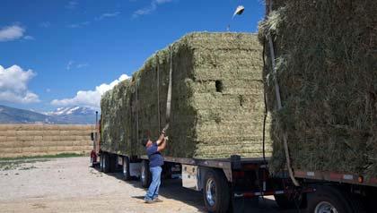 Empleos para personas mayores - Hombre ajusta carga de heno en un camión.
