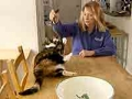Inside E Street career reboot mary dixon g'day dog pet care maryland publishing layoff business new