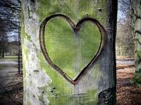 Arbol tallado con un corazón, trabajo realizado por boomers interesados en el medio ambiente.