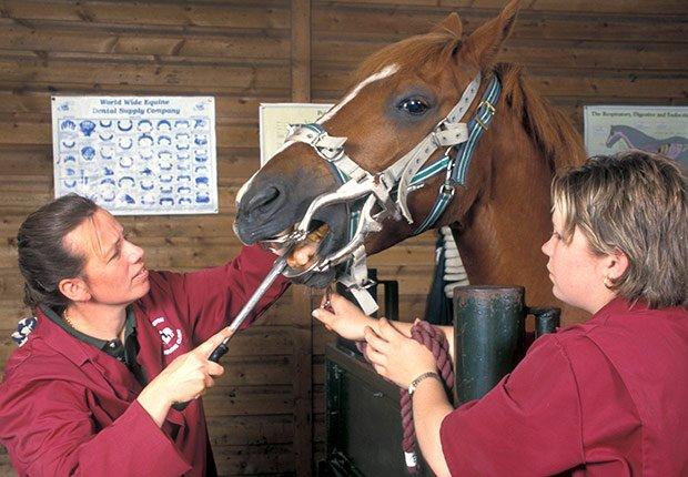 Dentista de caballos - Trabajos inusuales y bien remunerados