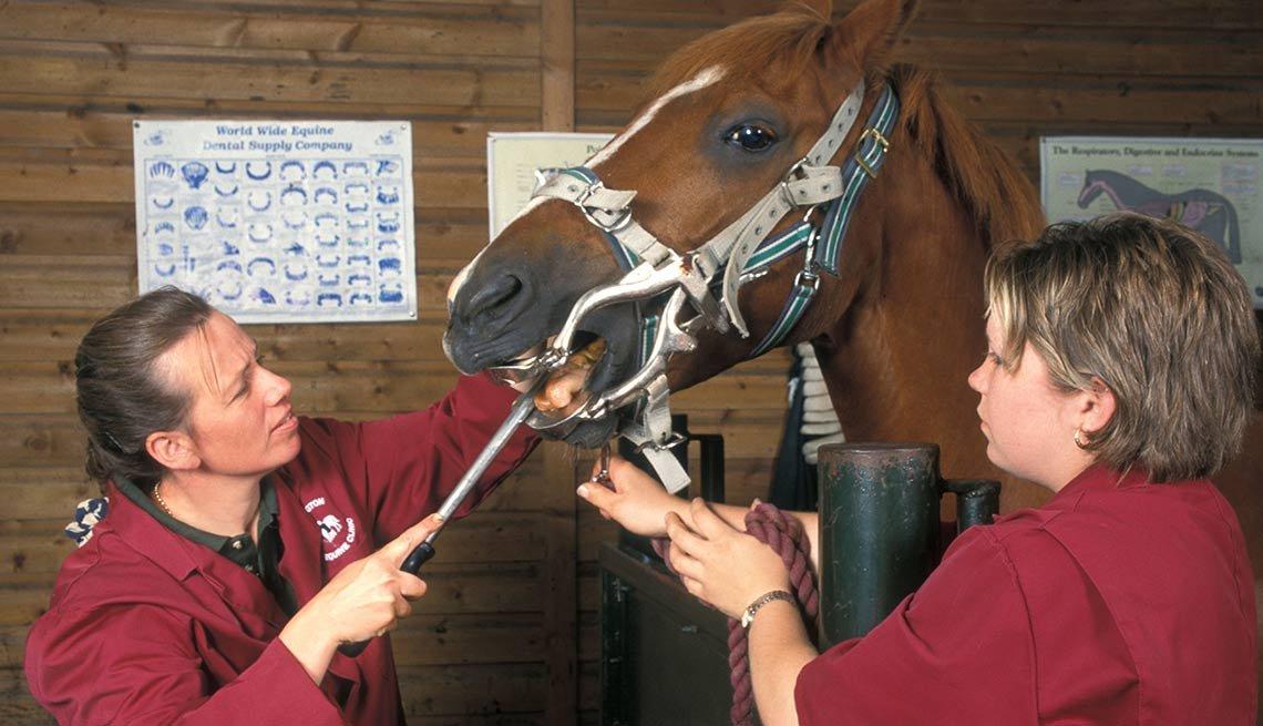 9 trabajos inusuales, pero bien pagados - Dentista de caballos