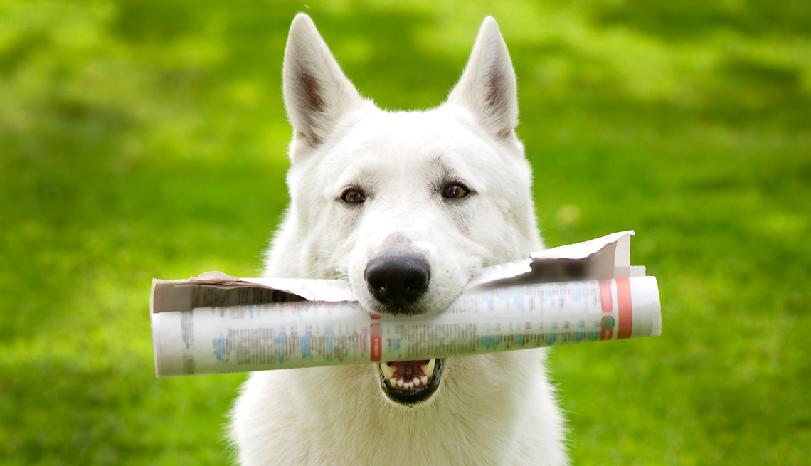 dog holds a document in it's mouth
