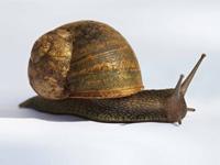 Caracol y su concha: esta concha de caracol representa el hogar de retiro para personas mayores