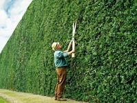 Define Your Retirement-a senior man trims a large green hedge