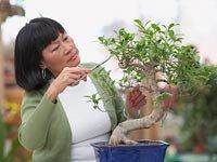 Decida hasta cuándo necesita trabajar - Mujer mayor podando un bonsai.