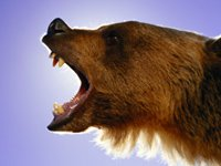 Bear eats stock market what to do with savings.