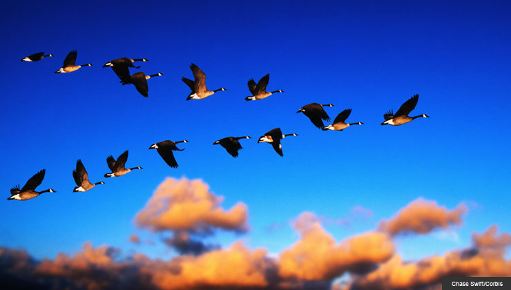 5 Great Jobs for Snowbirds