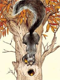 Ilustración de una ardilla que ahorra nueces para el invierno.