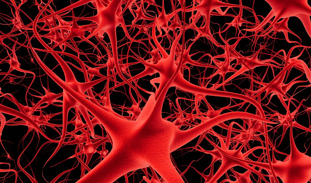 Connected neurons and nerves in a brain