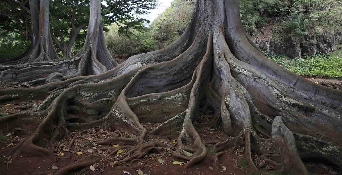 Allerton Garden, Kauai, Hawaii
