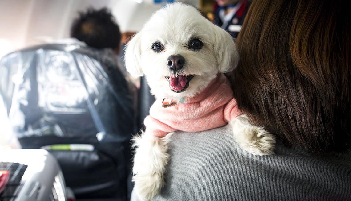 Un perro sobre el hombro de una persona que está sentada en un avión