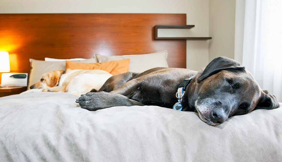 Dos perros acostados en una cama de hotel