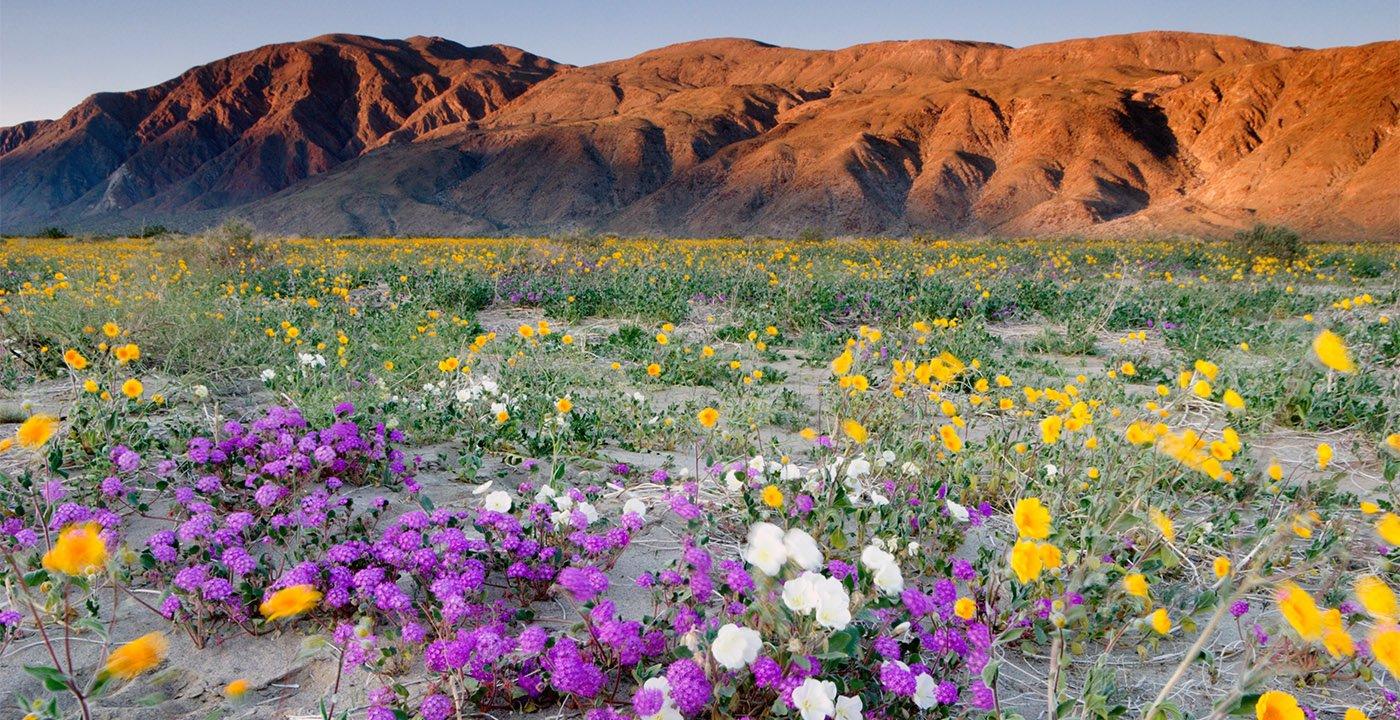Borrego Springs, Calif.