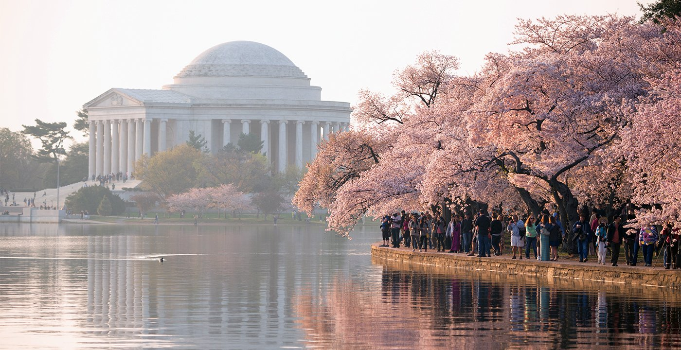 See the Nation's Capital in Bloom