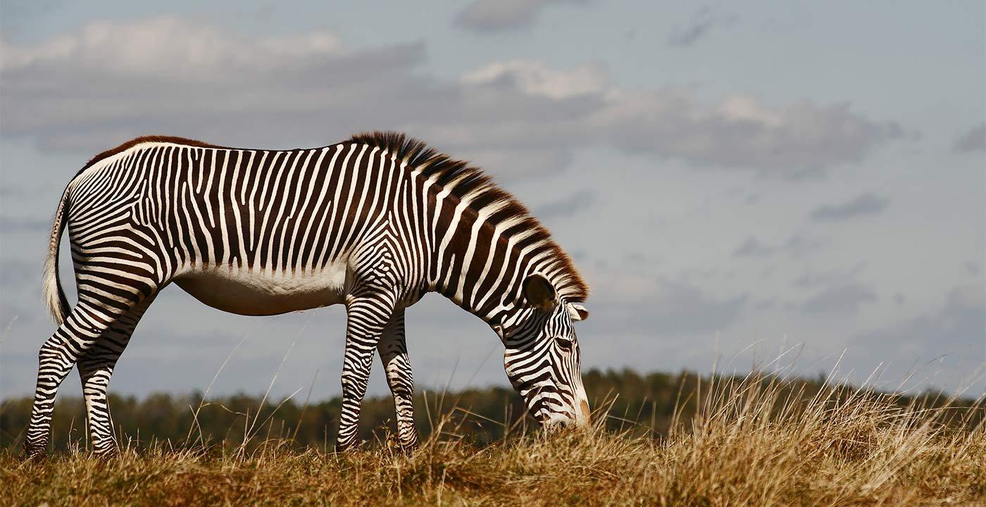 Safari in the U.S.A.