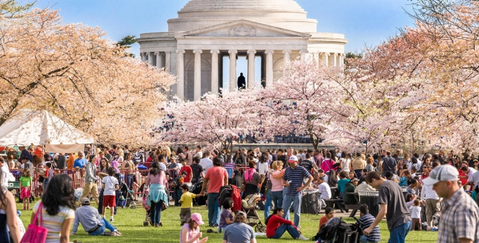 Cherry Blossom Festival — Washington, D.C.