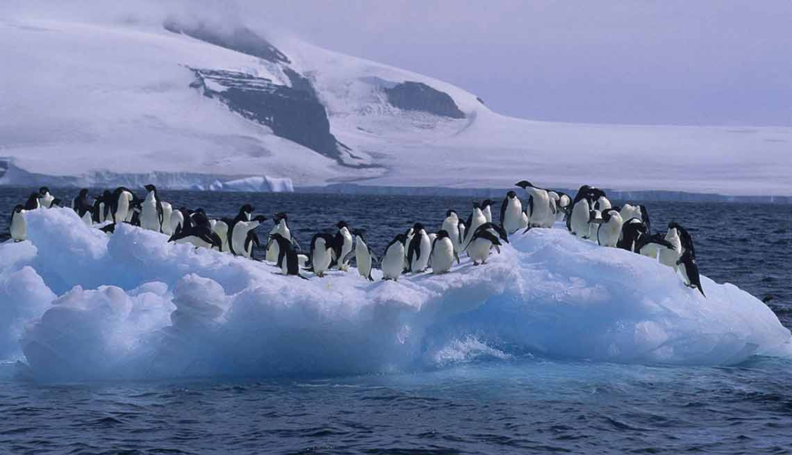 Disfruta de una experiencia de lujo a bordo de un crucero - Abercrombie & Kent, Le Lyrial, Antárctica