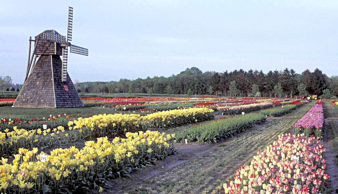 Affordable Spring Trips Holland