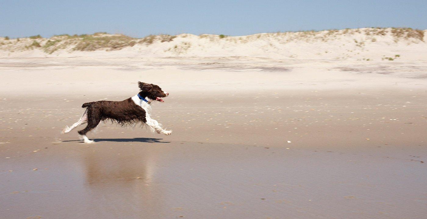 Lifeguard Beach, Ocracoke Island, North Carolina