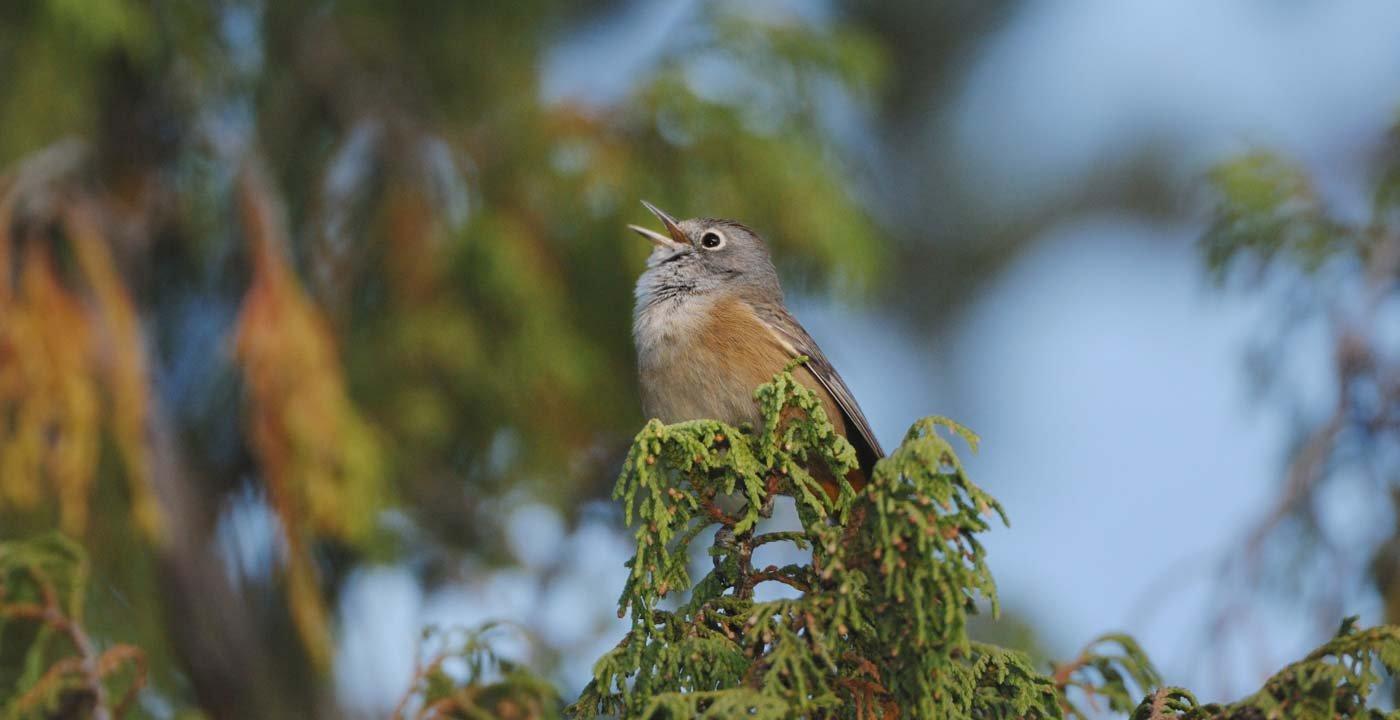 Birding in Big Bend