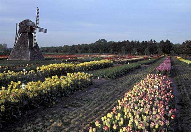 Holland, Michigan - 10 viajes económicos de primavera