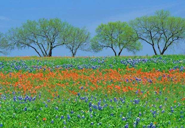 Fredericksburg, Texas - 10 viajes económicos de primavera