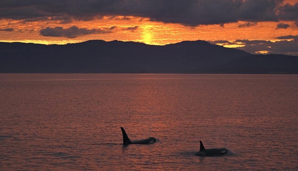 Mira una Orca en las islas San Juan  – Escapes de verano