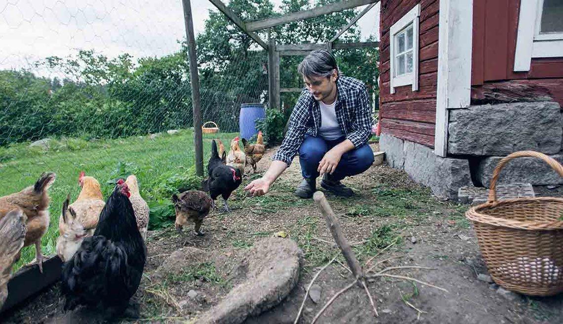 Hombre dandole de comer a las gallinas en una granja – Escapes de verano