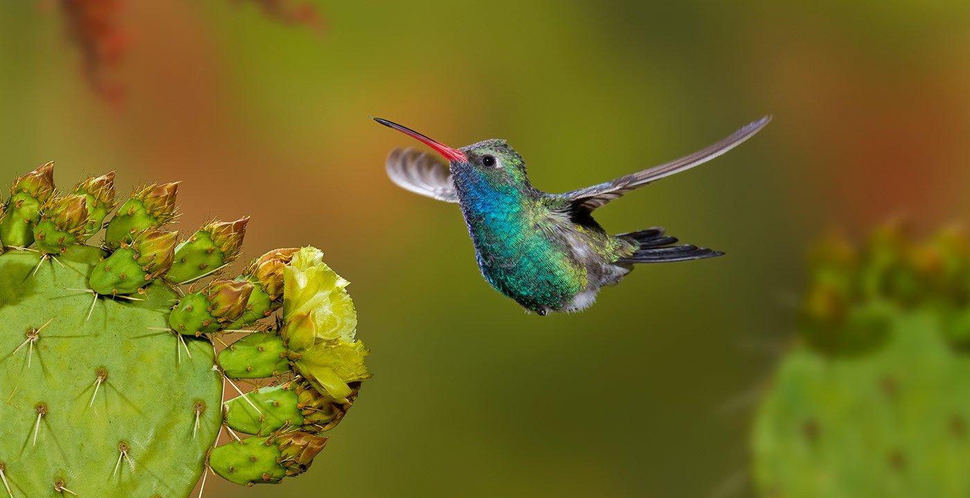 A Southwest Bird-Watching Tour