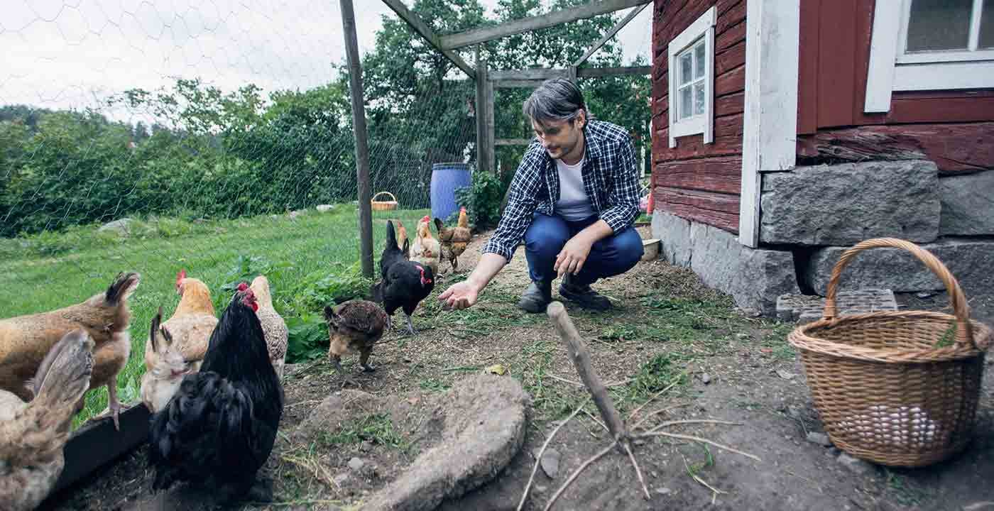 Man feeding chickens at poultry farm, Ten Places to Go This Summer