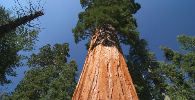 Sequoia and Kings Canyon National Parks, California