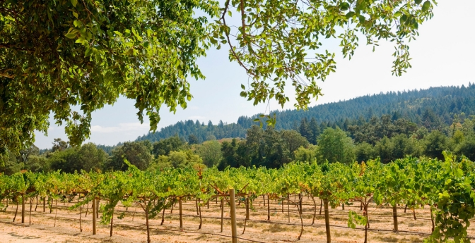 Go Vine-Peeping in Wine Country