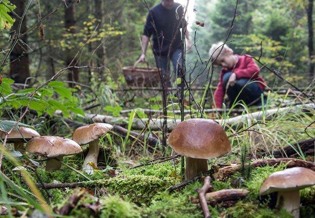 Champiñones silvestres en British Columbia - 11 Vacaciones de otoño en las que usted nunca pensó