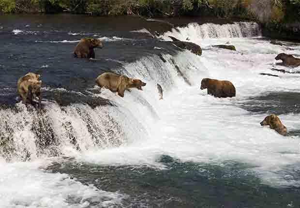 Parques que pasan desapercibidos en EE.UU. - Katmai National Park