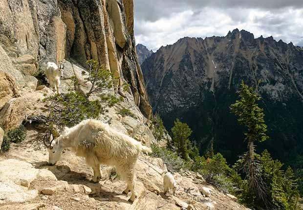 Parques que pasan desapercibidos en EE.UU. - North Cascades