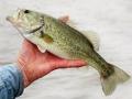 Hombre sosteniendo un pescado - Los 10 Mejores lugares de pesca y la navegación en los Estados Unidos