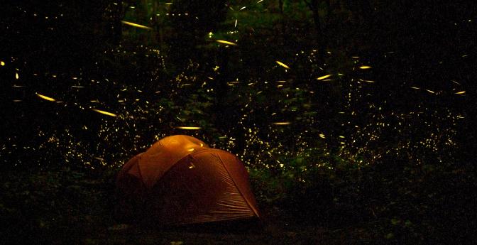 Firefly Fantasia