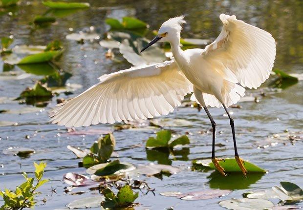 Un pájaro levanta el vuelo en los Everglades de Florida, 10 maravillas naturales para ver ahora, antes que desaparezcan