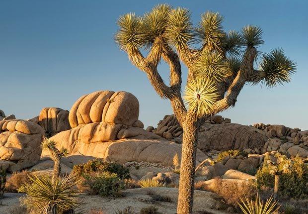 Parque Nacional Joshua Tree, 10 maravillas naturales para ver ahora, antes que desaparezcan