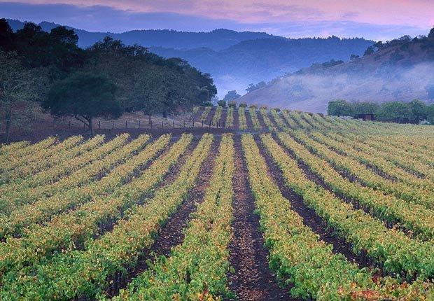 Un viñedo en el valle de Napa, 10 maravillas naturales para ver ahora, antes que desaparezcan