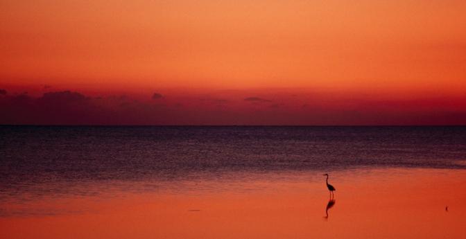 Most Secret Sunset: Key West, Florida