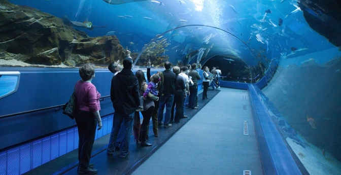 The Georgia Aquarium opened its doors on Nov. 23, 2005, and is a popular Atlanta attraction.