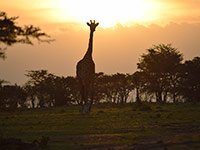What a way to celebrate 25 years of marriage: at the Olare Motorogi Conservancy in Kenya!