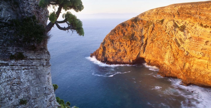 Santa Cruz Island shows you restoration and conservation at its best; native plants and animals are thriving.