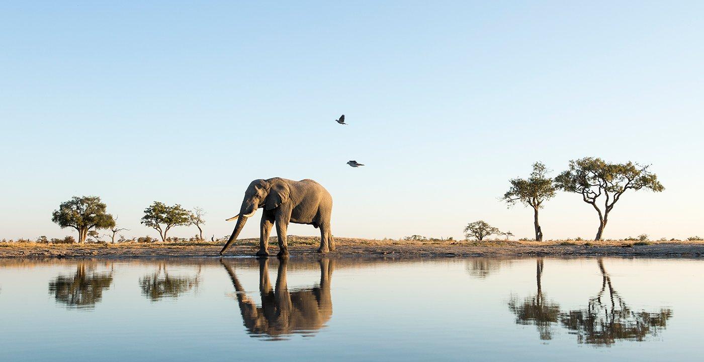 Elefante caminando