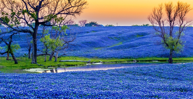 Texas Bluebonnet Trail